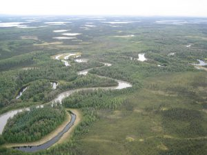 yukon-kuskokwim bottomlands