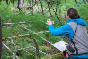 researcher measuring vegetation