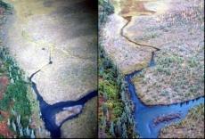 wetland photo pair